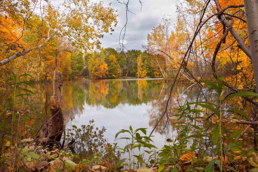 Fall landscape of pond